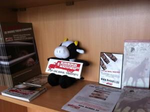 A little friend in the new AnimalWelfareAndTrade office