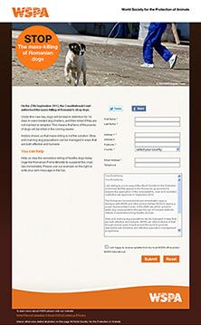 Romanian Stray Dogs