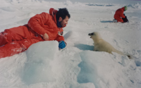 Seal watching with IFAW - Gulf of Saint Lawrence, Canada, 1994