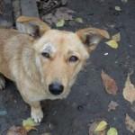 Stray dog - Romania, 2013