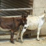 Donkeys - Il rifugio degli asinelli, Sala Biellese, Italy, 2013