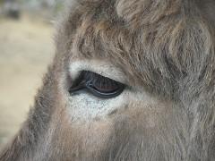 """Donkey - Fondazione """"Il rifugio degli asinelli ONLUS"""" , Sala Biellese, Italy, 2013"""
