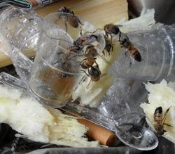 Bees - Paraty, Brazil, 2012