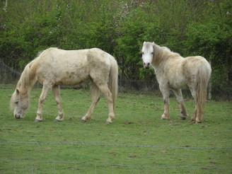 Horses - West Malling, UK, 2014
