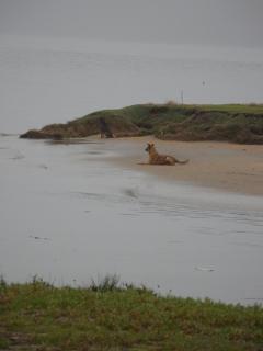 Stray dogs on a beach - Paraty, Brazil, 2012