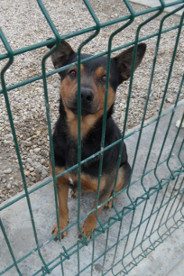 Guest in Save the Dogs shelter – Cernavoda, Romania, 2013